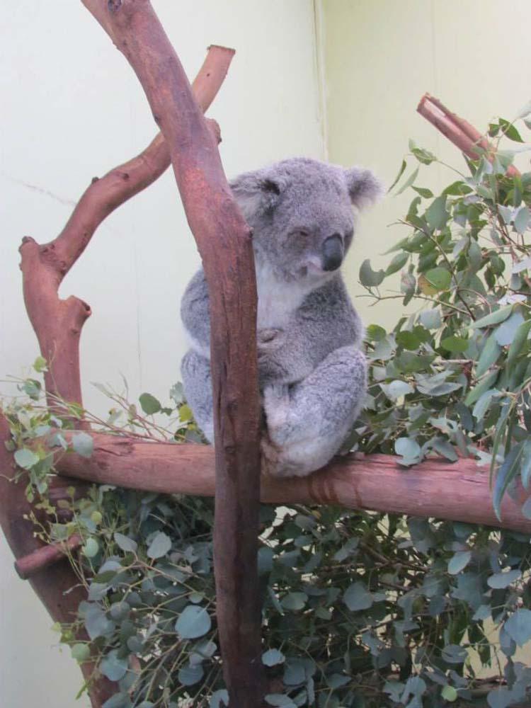SLAS Amazing Australia 13