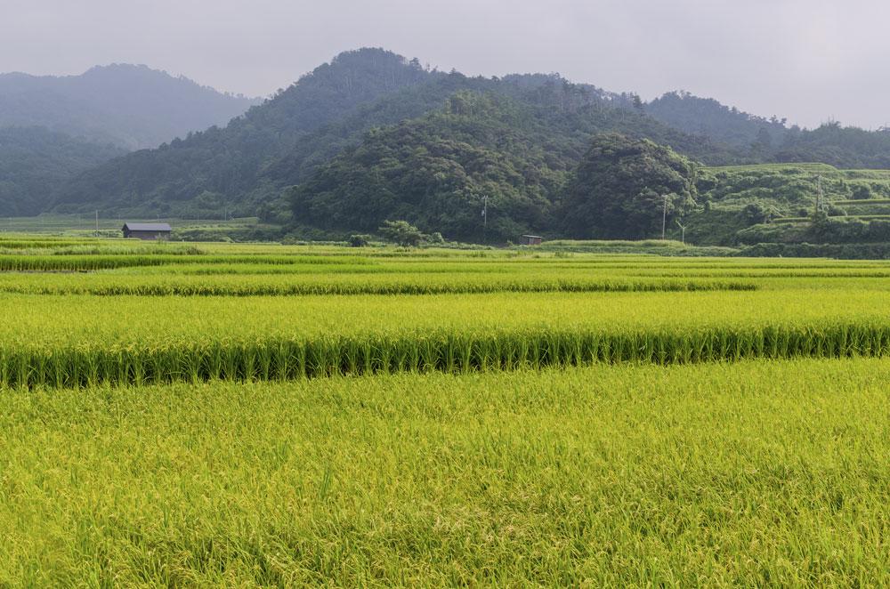 SLJPN 07 Kyoto landscape