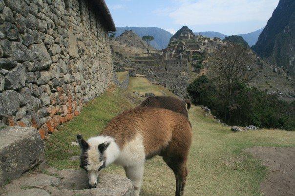 SLPER Highlights of Peru 10