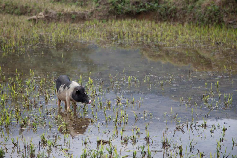 SLVN Discover Vietnam 17