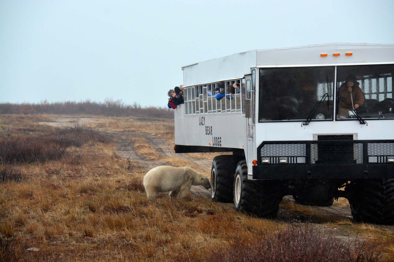 UPB Winter Polar Bear Encounter 14